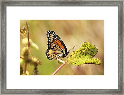 Framed Print featuring the photograph Monarch by Rick Friedle