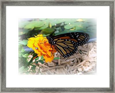 Monarch Framed Print by Trina Prenzi