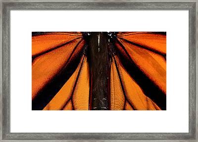 Monarch Wings Framed Print by Thomas Morris