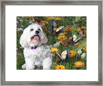 Monarchs Kiss The Sun Framed Print by Starlite Studio