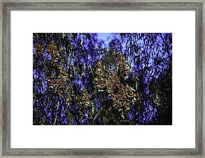 Monchard Cluster Framed Print by Garry Gay