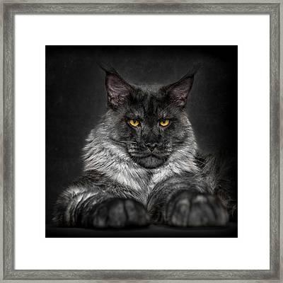 Framed Print featuring the photograph Monday Face. by Robert Sijka