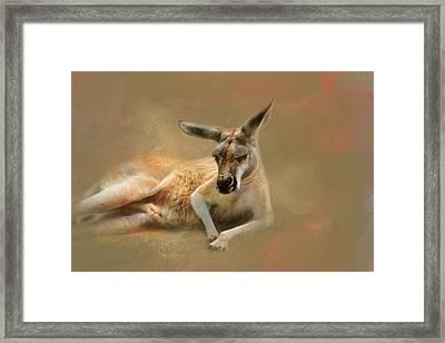 Monday Morning Drowsies Kangaroo Art Framed Print by Jai Johnson