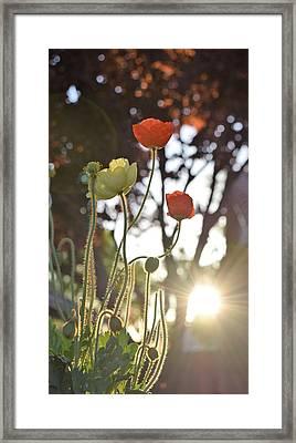 Monday Morning Sunrise Framed Print