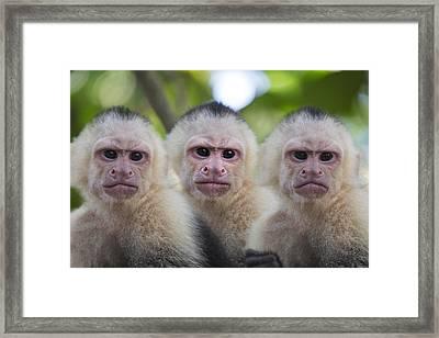 Monday Mornings Framed Print