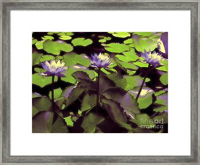 Monets Lillies Framed Print by Karen Lewis