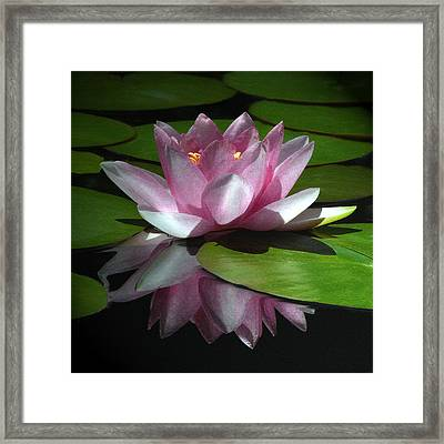 Monet's Muse Framed Print