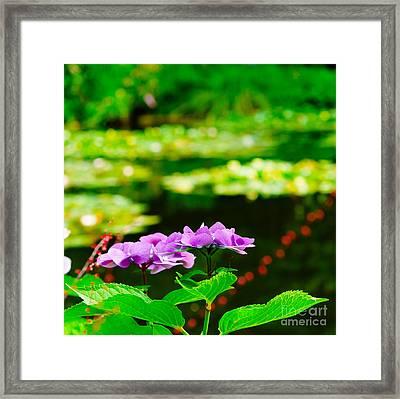 Monet's Purple Lace Hydrangeas  Framed Print by MaryJane Armstrong