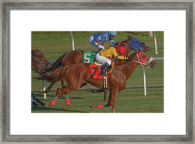 Money On The Chestnut Framed Print by Betsy Knapp