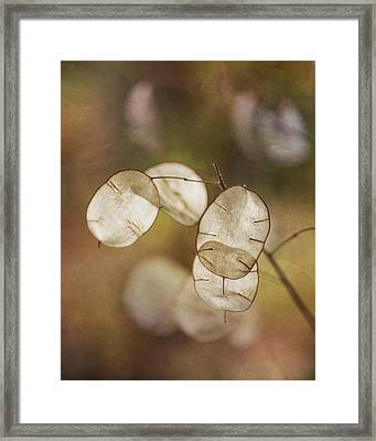Money Plant Framed Print