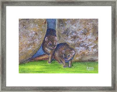 Mongoose #511 Framed Print by Donald k Hall