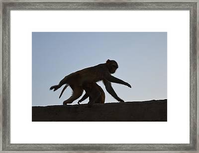 Monkey Buisness Framed Print