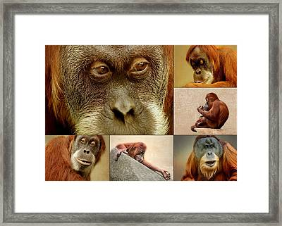 Monkey Collage Framed Print