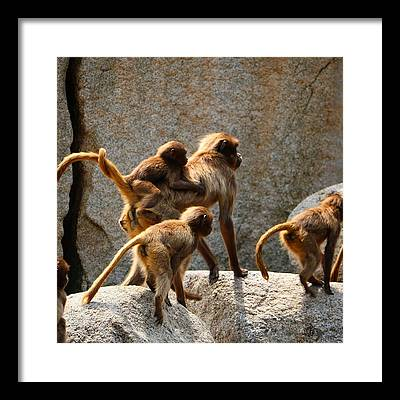 Animal Family Framed Prints