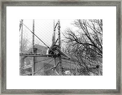 Monkey Grab  Framed Print