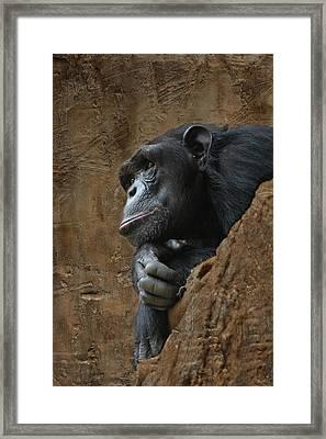 Monkey Portraet Framed Print