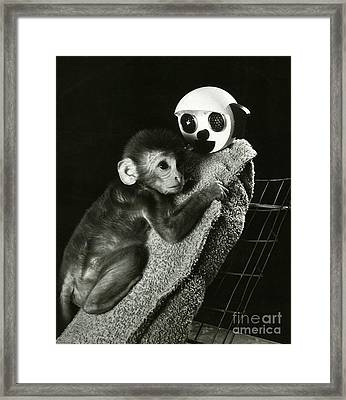 Monkey Research Framed Print by Photo Researchers, Inc.