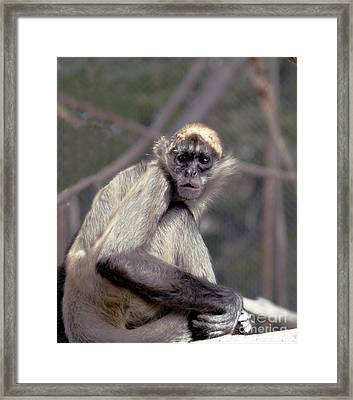 What Are You Looking At Framed Print by Irma BACKELANT GALLERIES
