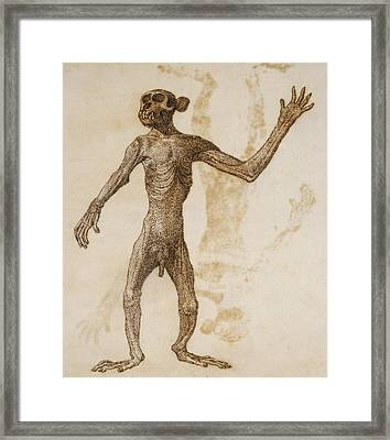 Monkey Standing, Anterior View Framed Print by George Stubbs