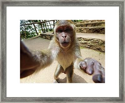 Monkey Taking A Selfie Framed Print