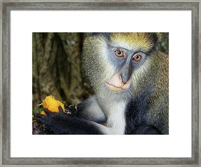 Monkey With His Mango Framed Print