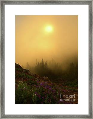 Monkeyflower Dawning Framed Print by Mike Dawson