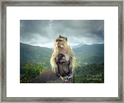 Monkeys At The Gorges Viewpoint. Mauritius.  Framed Print