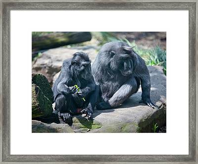 Monkeys Framed Print by Christina Durity