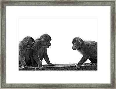 Monkeys Getting Ready For Fight At Chinese Temple Framed Print by Flemming Søgaard Jensen