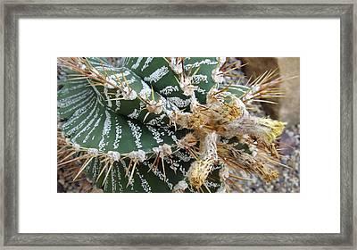 Monk's Hood Cactus Framed Print by Joyce Wasser