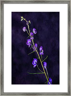 Monkshood Version 2 Framed Print
