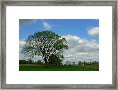 Framed Print featuring the photograph Monmouth Battlefield by Steven Richman