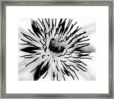 Mono Clematis Framed Print