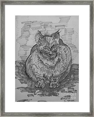 Monochrome Cat Framed Print by Caroline Street