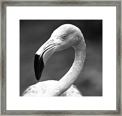 Monochrome Flamingo 2 Framed Print by Dan Sproul