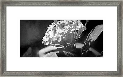 Monochrome Flora Framed Print