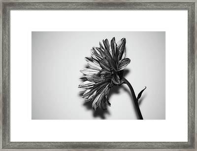Monochrome Flower Framed Print by Martin Newman