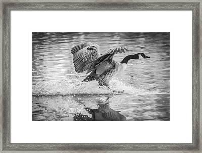 Monochrome Landing Framed Print by Parker Cunningham