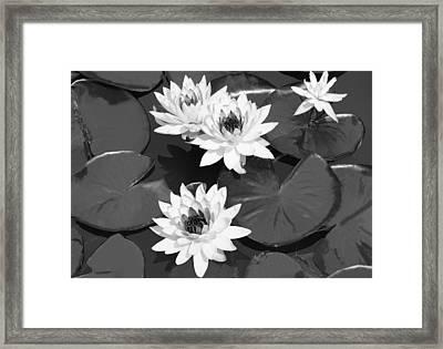 Monochrome Lilies Framed Print by Milena Ilieva