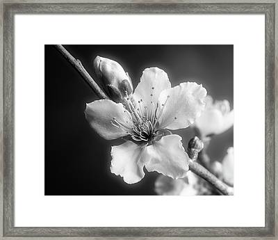 Monochrome Peach Blooms 5535.01 Framed Print by M K  Miller