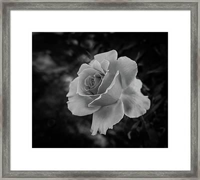 Monochrome Rose Macro Framed Print