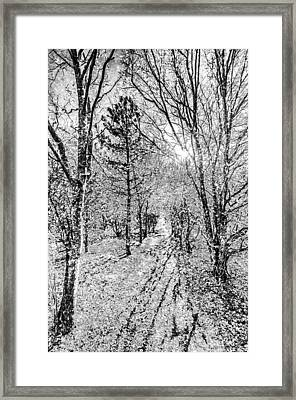 Monochrome Snow Forest Art Framed Print