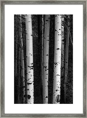 Framed Print featuring the photograph Monochrome Wilderness Wonders by James BO Insogna