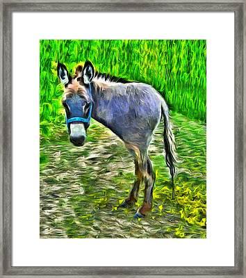 Monodonkey - Pa Framed Print