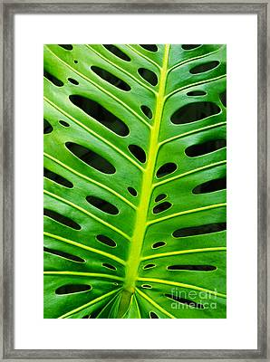 Monstera Leaf Framed Print by Carlos Caetano