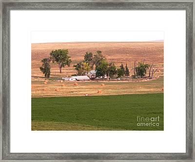 Montana Harvest Time Framed Print