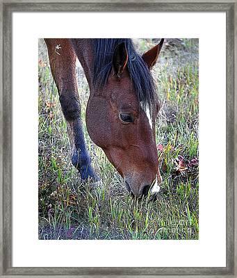 Montana Horse Framed Print by Diane E Berry