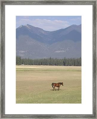 Montana Ranch Framed Print by Lisa Patti Konkol
