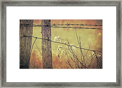 Montana Rustic Fence And Wildflower Weeds  Framed Print