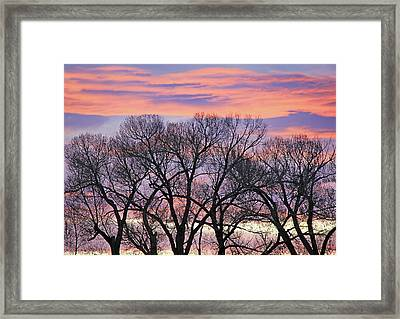 Framed Print featuring the photograph Montana Sunrise Tree Silhouette by Jennie Marie Schell